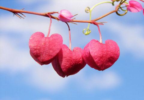 Tình yêu bắt đầu từ… đồn Công An