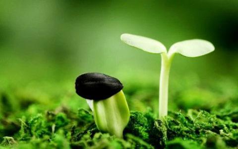 Giá trị cuộc sống từ thiên nhiên
