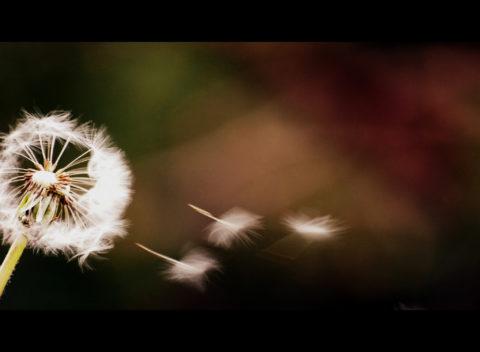 Cơn gió