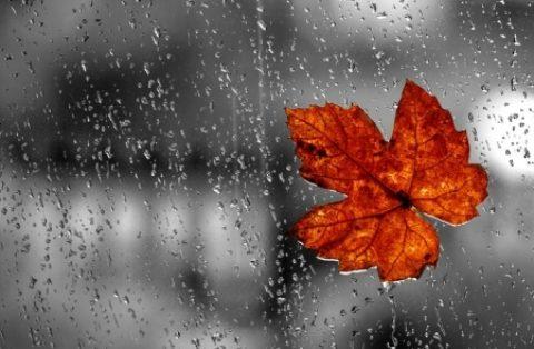 Lá thư gửi cơn mưa mùa hạ